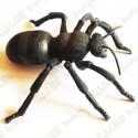 "Cache ""Bestiole"" - Grosse fourmi"