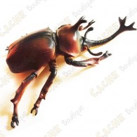 """Cache """"insect"""" - Large rhinoceros beetle"""